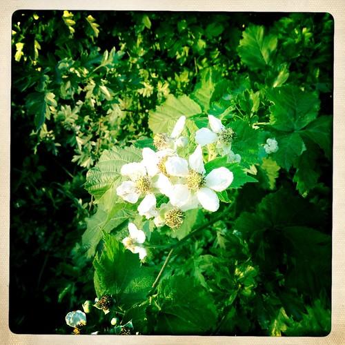 Blackberries EyeEm Best Shots EyeEm EyeEm Best Shots - My World EyeEm Gallery NEM Submissions