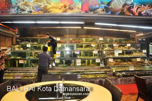 Bali Hai 11