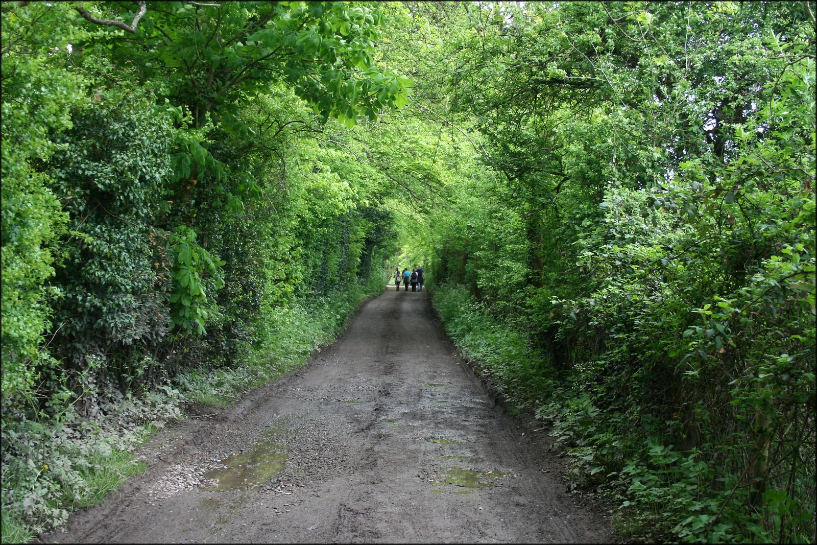 Path near Silchester
