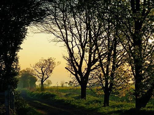 trees sun tree nature scenic bedfordshire naturereserve vista felton lumen wildlifetrust greensandridge robertfelton greensandridgewalk oldwardentunnel oldwardentunnelnaturereserve wildlifetrustforbedfordshirecambridgeshireandnorthamptonshire