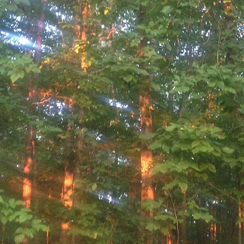 A gift of sunlight filtering through the trees as I leave this morning. #HisMerciesAreNew #SmallGroupDay