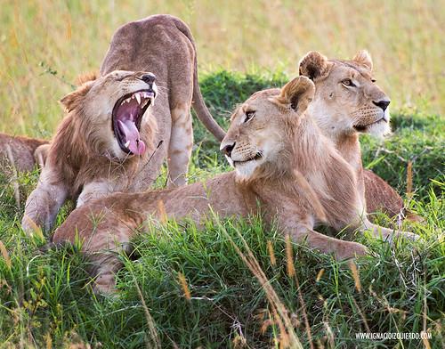 Kenia - Masai Mara 57