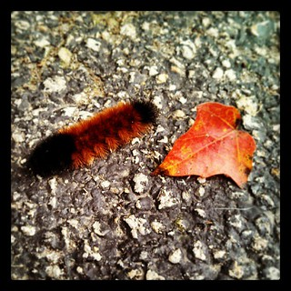 Good Morning Mr #WoollyBear #caterpillar #fall #leaf
