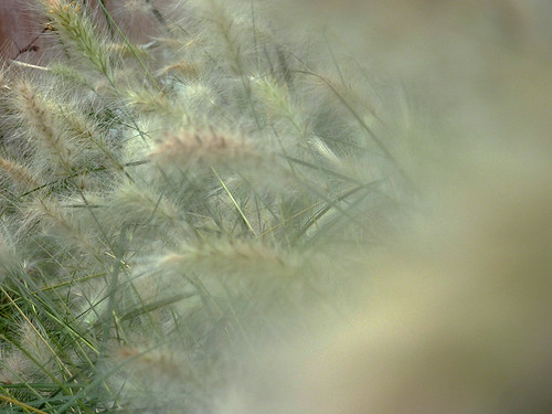 fotografía caminoroque