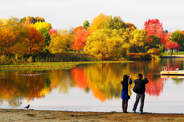 Capture the Colours of Fall
