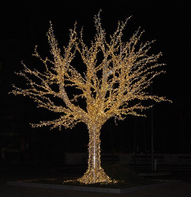 012_Trees1