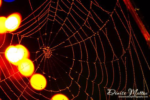 353: Spider webs