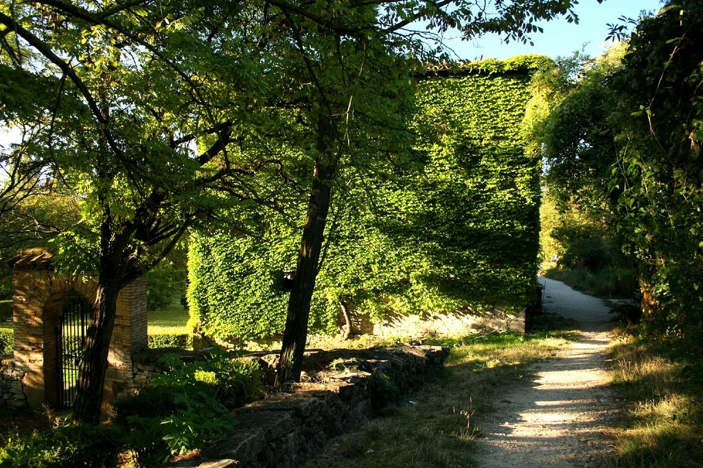 6. Verde sobre verde en el camino. Autor, Guu
