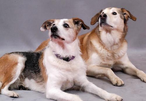 dogs pose