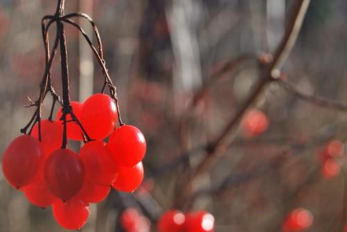 Red berries (explored)