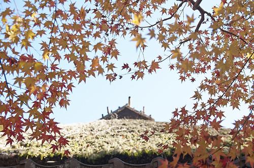 【写真】紅葉 : 落柿舎