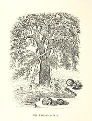 Image taken from page 160 of 'Lose Blätter aus Abazia. Mit 32 Illustrationen. [By Louis Salvator, Archduke of Austria.]'