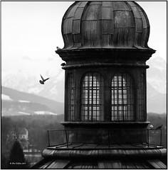 Nonntal_Kirche mit Taube_Hasselblad