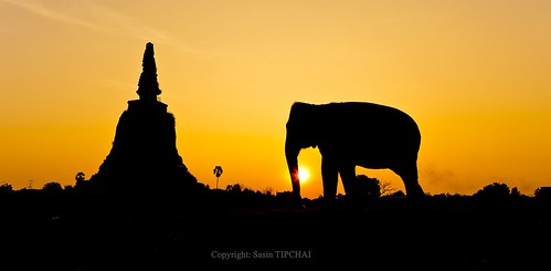 travel sunset red sky sunlight elephant man tourism animal silhouette composite skyline umbrella landscape asian thailand mammal pagoda countryside big asia power slow carriage ride muscle walk seat traditional transport large culture tourist adventure parasol shade enjoy massive attractive trunk lone strong driver colourful partnership leading excursion attraction controlled ayuttaya