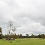 A sheep's meadow, Versailles
