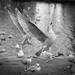 Seagull Ballerina by TomasHaande