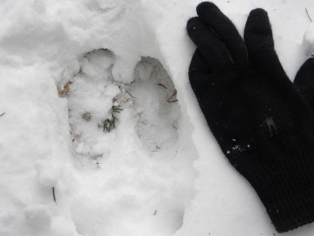 Yukon Quest training - Moose tracks