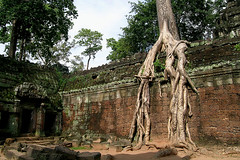 Ta Prohm - Covering Roots