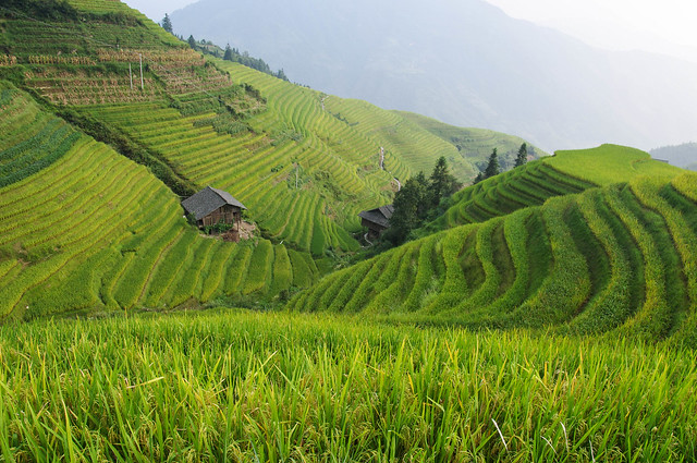 China, Little house in the rice fields
