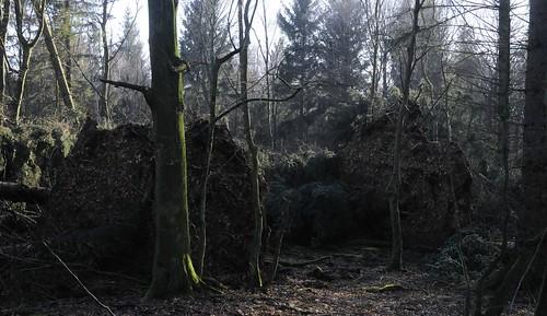 Schäden durch das Sturmtief Christian; Staatsforsten in Ostenfeld, Nordfriesland (14)