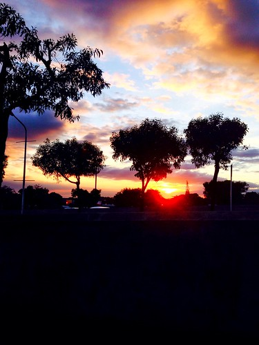 trees sunset colour nature beautiful three dusk loveit colorvibefilter