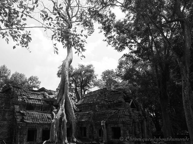 Ta Phrom, la revanche de la nature