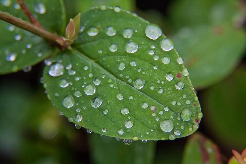 raindrops  5/7