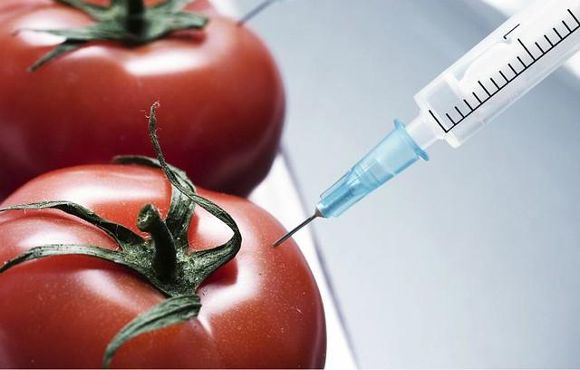 1Tomato-GMO-diarioecologia.jpg