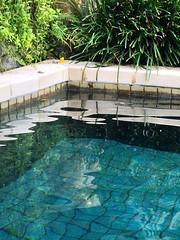 Last dip in our pool