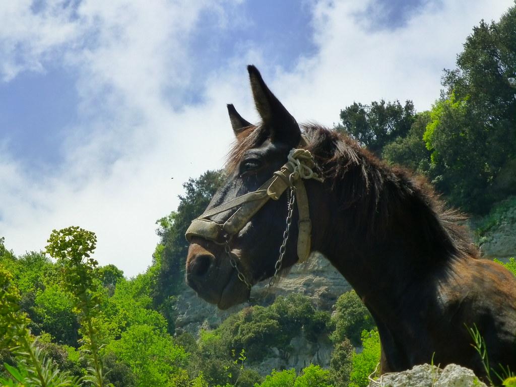 A local mule keeps an eye on us