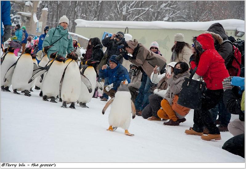 Day5 - 旭山動物園 - 企鵝散步-57