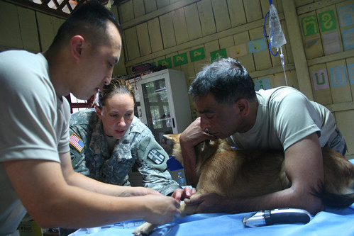 Pacific Partnership Veterinarians Improve Quality of Life