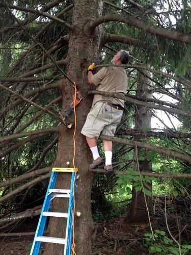 TreeTrimming-1