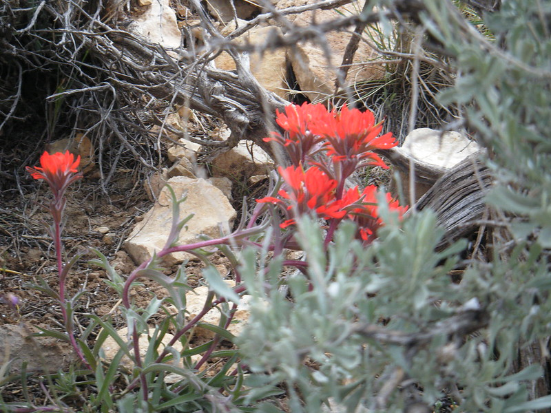 Nice reds and sagebrush