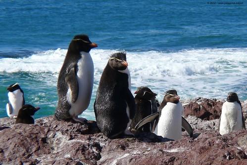 Autor: patagonia.expert1