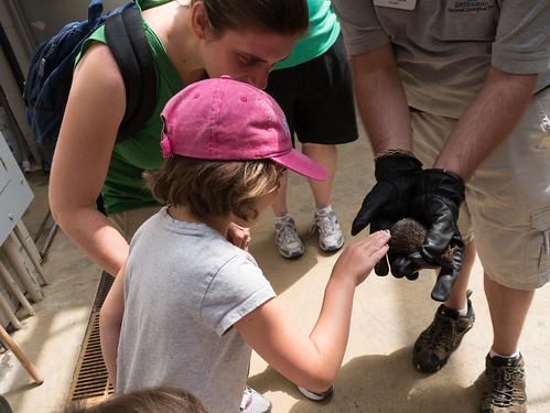 Petting a tenrec