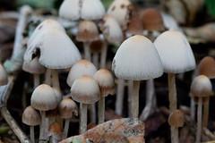 Fungi from a fun guy!?