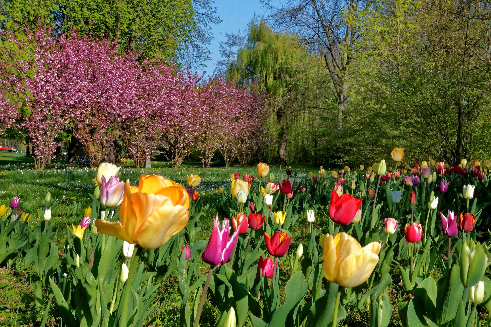 Frühling im Bad Mergentheimer Kurpark