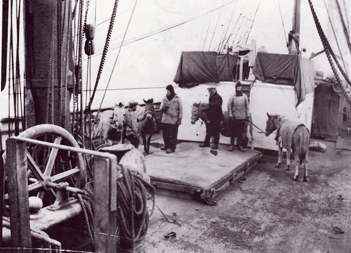 The Siberian ponies on board the ship Terra Nova