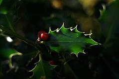 Oсень/Podzim/Autumn