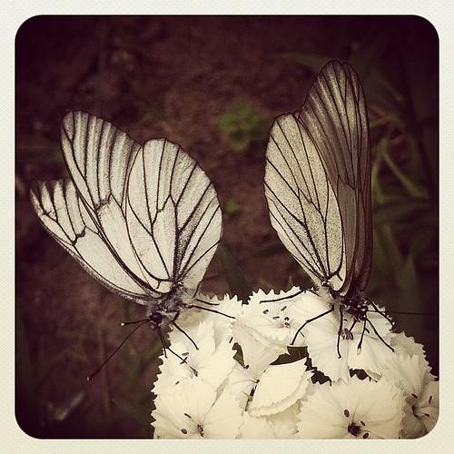 #flowers #butterfly