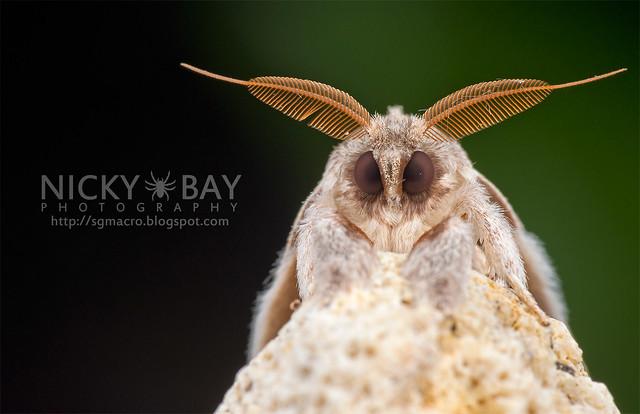 Puppy Moth - DSC_6668