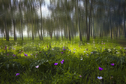 The magic forest by Gabriella Hal