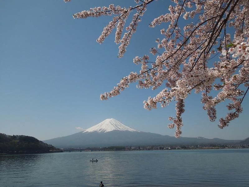 河口湖 富士山と桜 Lake Kawaguchiko – Mt. Fuji and cherry blossoms-0004