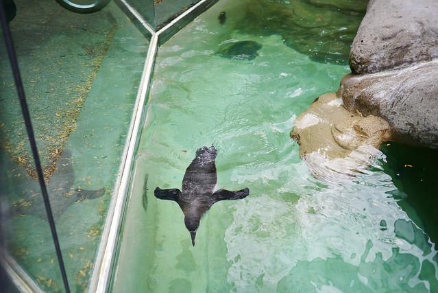Columbus Zoo And Aquarium Flickr Photo Sharing