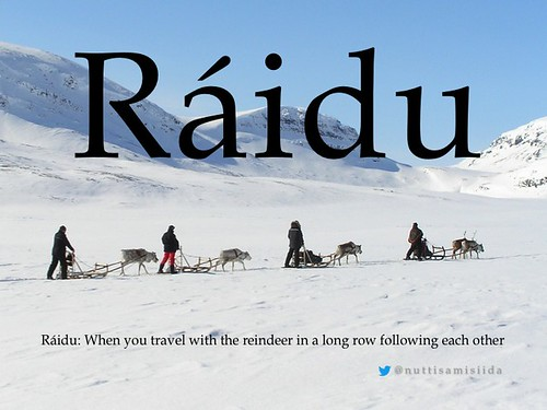 Ráidu = When you travel with the reindeer in a long row following each other #sami @nuttisamisiida