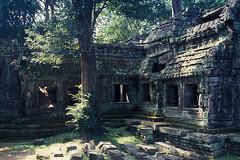 Ta Prohm - Jungle Corner