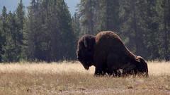 2013 09 10-13 Yellowstone