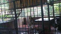 Tiny tiger cage 3