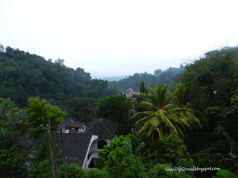 Шри Ланка отличается бурной растительностью
